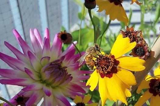 Honeybee-4 by Hatin Josee