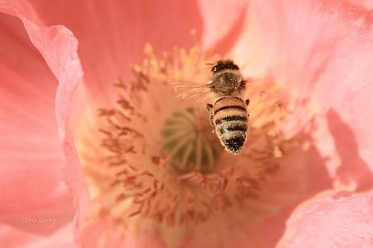 Honeybee Descending   by Chris Berry