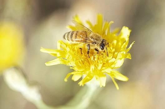 HoneyBee by Nikki McInnes