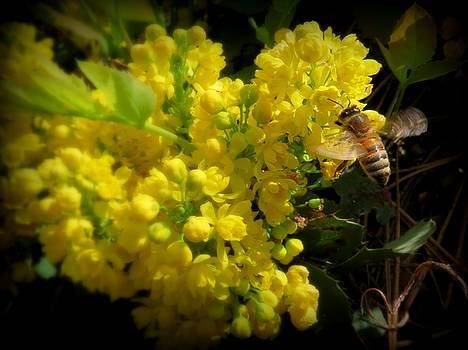 Leah Grunzke - Honeybee on a Mahonia