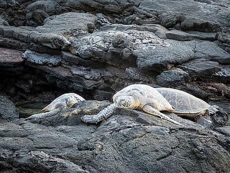 Honu or  Hawaiian Green Sea Turtles by Mary Lee Dereske
