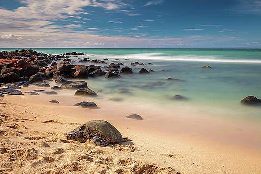 Honu sleeping at Baby Beach by Pierre Leclerc Photography
