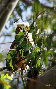 Hoo Goes There? by Diana Haronis