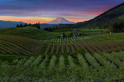 Hood River Pear Orchards at Sunset by David Gn