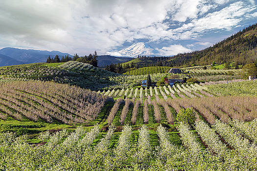 Hood River Pear Orchards on a Cloudy Day by David Gn