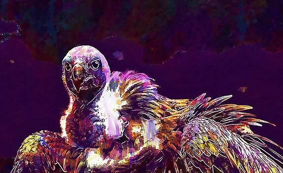 Hooded Vulture Vulture Hooded  by PixBreak Art
