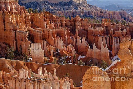 Hoodoos in Morning Light by Jennifer Magallon