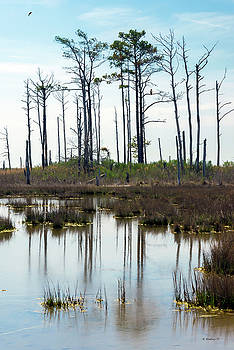 Hooper's Island Landscape by Brian Wallace
