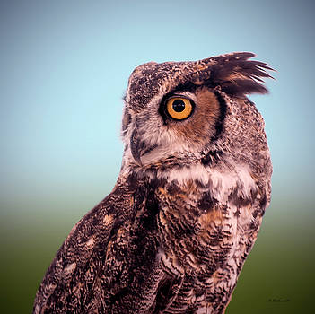Hoot Owl - Great Horned Owl by Brian Wallace