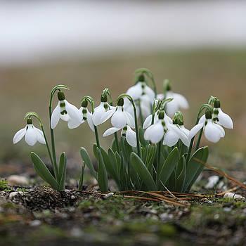 Hope for Spring by Steve Gravano