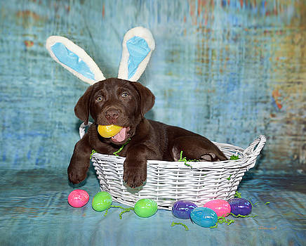 Hoppy Easter by Dale Hall