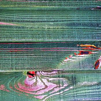 Horizontal Lines by Anne Kotan