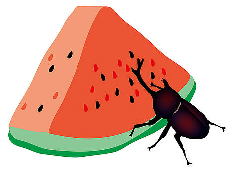 Horn beetle is eating a piece of red watermelon by Moto-hal