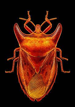 Horn Bug by Gary Shepard