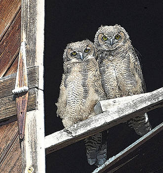 Horned Owls by Brent Easley