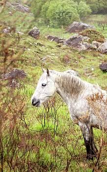 Horse 1 by Alexa Gurney