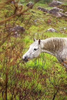 Horse 3 by Alexa Gurney