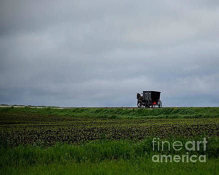 Horse And Buggy Travel by Kathy M Krause