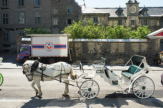 Horse and Carriage Montreal by Michael Gallitelli