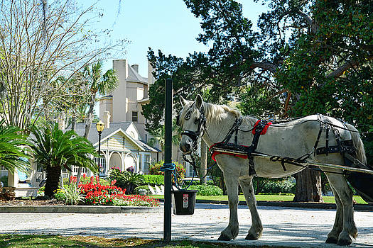 Horse and Jekyll lsland Club Hotel by Bruce Gourley