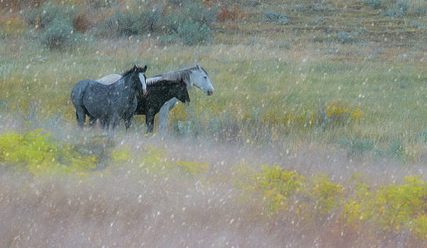 Horse and sleet  by Kelly Marquardt
