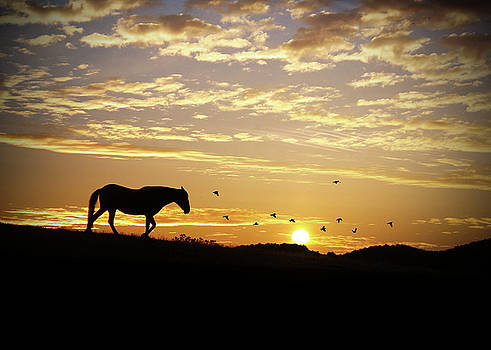Horse and Sunrise with Birds by Stephanie Laird