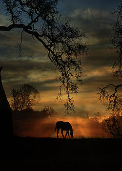 Horse and Sunrise with Fog and Oak Tree by Stephanie Laird