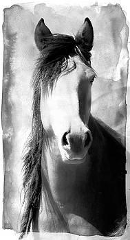 Horse Art by Athena Mckinzie