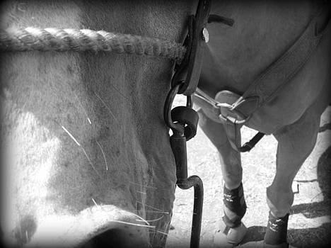 Horse by Ashley Scheer
