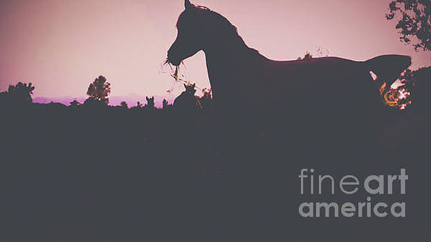 Horse at Sunset  by Peggy Franz