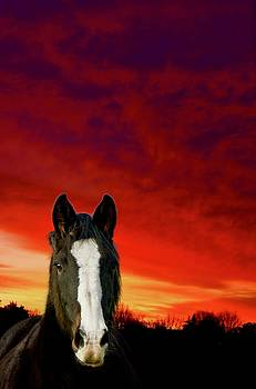 Horse At Sunset  by Phil Child