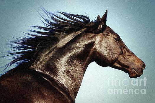 Horse Beauty by Dimitar Hristov