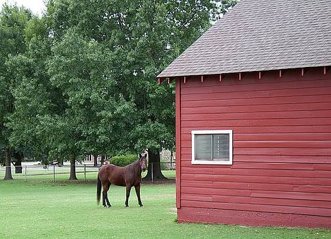 Horse behind Red Barn by Janet K Wilcox