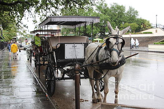 Chuck Kuhn - Horse Carriage Tourists New Orleans