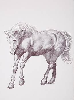 Horse by Dan Moran