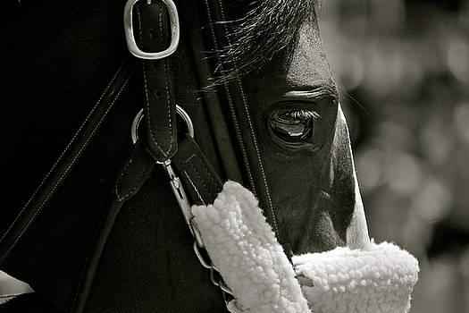 Horse Eye by Amanda Lonergan