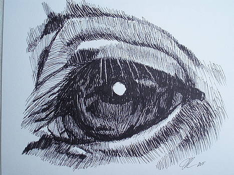 Horse Eye by Michael Runner