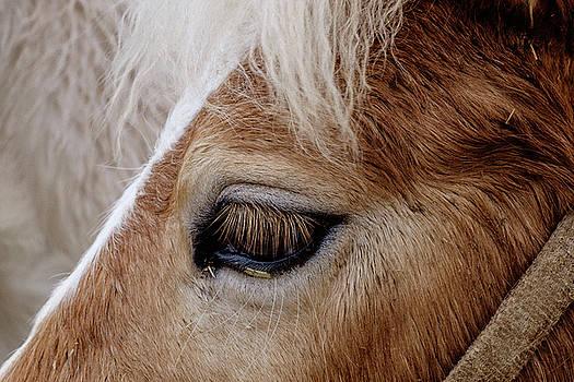Horse Eye by Okan YILMAZ