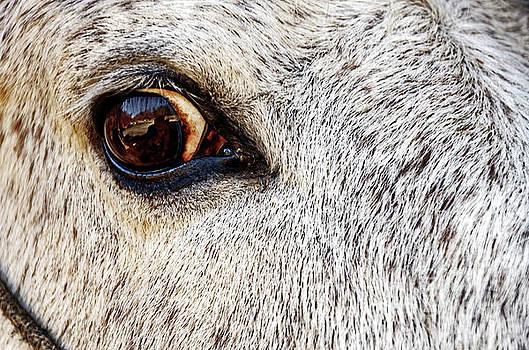 Horse Eyed by Paul Mashburn