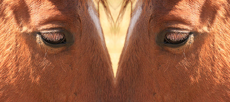 James BO  Insogna - Horse Eyes Love