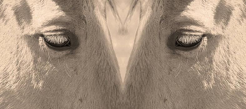 James BO  Insogna - Horse Eyes Love Sepia