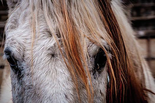 Horse Eyes by Okan YILMAZ