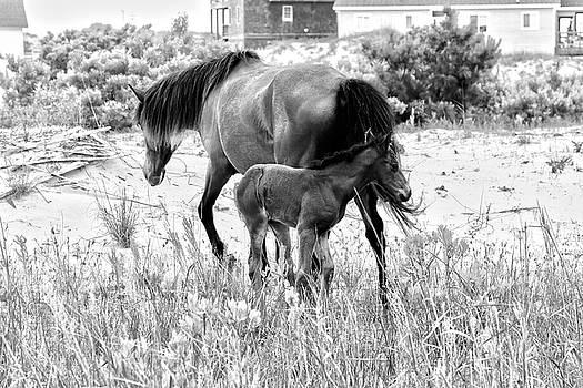 Horse Family 2 by David Stasiak