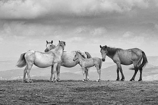 Horse Family by David Garcia Eirin