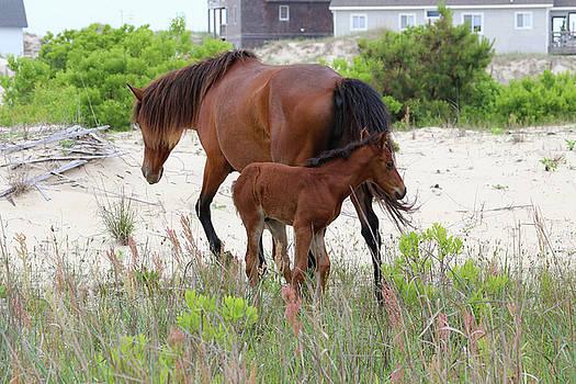 Horse Family by David Stasiak