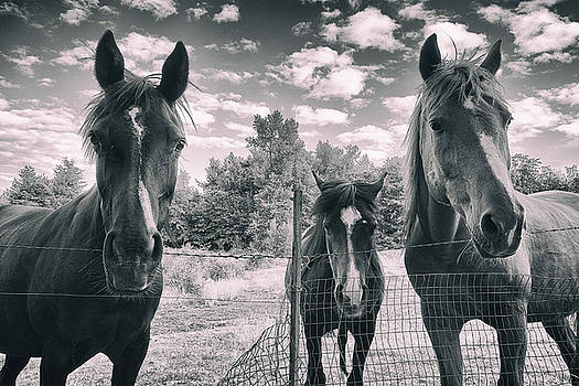Horse Family by Jason Butts