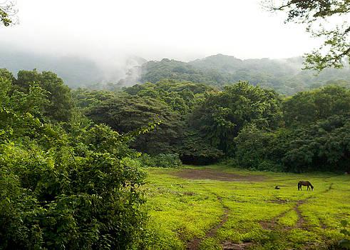 Maria - Horse Field Mist