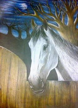 Horse Freedom Dream by Tamer Elsamahy