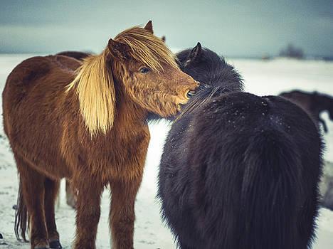 Horse friends forever by Benjamin Wiedmann