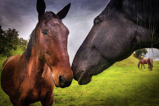 Horse Friendship by Cheryl Ramalho